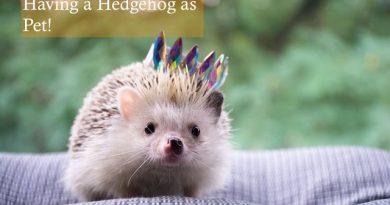 Having a Hedgehog as a Pet photo by Liudmyla Denysiuk on Unplash