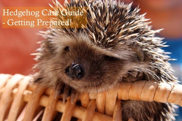 Hedgehog Care Guide - Getting Prepared HHC 101 photo by Christiane Hartl on unsplash