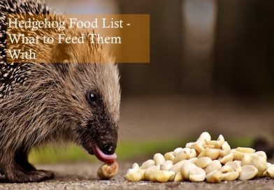 Hedgehog Food List - What to Feed Them With Photo by Hier Und jetzt on Pixabay