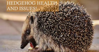 Hedgehog Health and Issues photo by Alexas Fotos on Pixabay