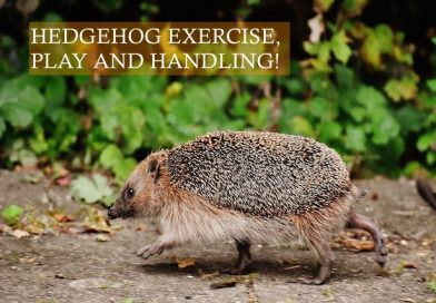 Hedgehog exercise, play and handling photo by Alexa photos on Pixabay