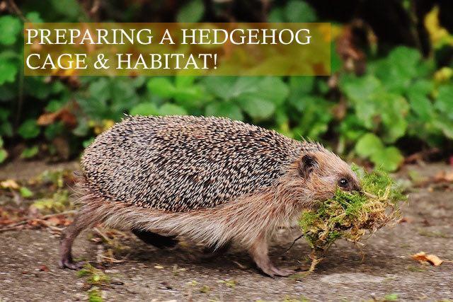 Preparing a Hedgehog Cage and Habitat photo by Alexas Fotos on unsplash