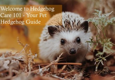 Welcome to Hedgehog Care 101 - Your Pet Hedgehog Guide photo by Sierra Nicole Narvaeth on unsplash