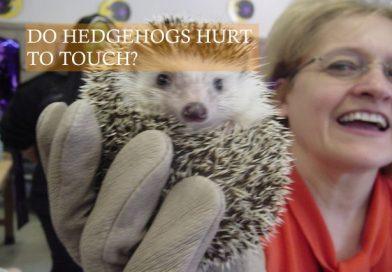 Do Hedgehog hurt to touch photo by Ariel Camilo