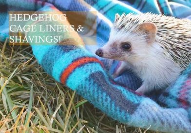 Hedgehog Cage Liners and Shavings photo by Taylor Binkley on unsplash