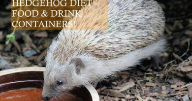 Hedgehog Diet - Food and drink containers PHOTO BY Dusan Veverkolog on unsplash